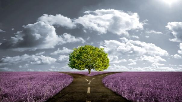 crossroad-path-in-lavender-meadow1.jpg